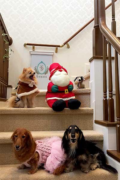 サンタと犬たち